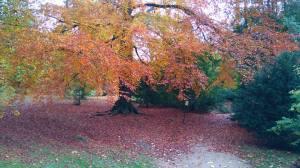 Chatsowrth tree