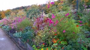 Chatsworth border